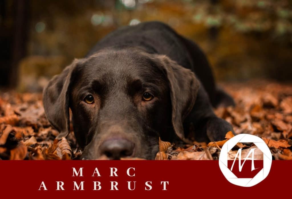 Gestaltete Internetseite von Marc Armbrust durch M-Online-Solutions webdesign in Landstuhl